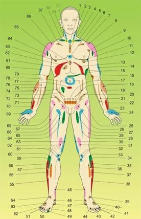 Органы человеческого тела, о которых мы не знали
